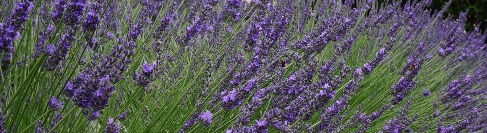 Αρωματικά & Φαρμακευτικά Φυτά